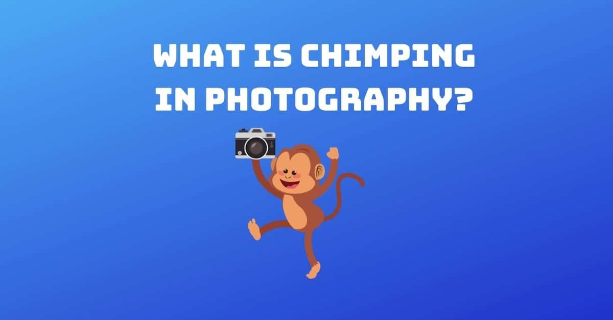 What is Chimping in Photography